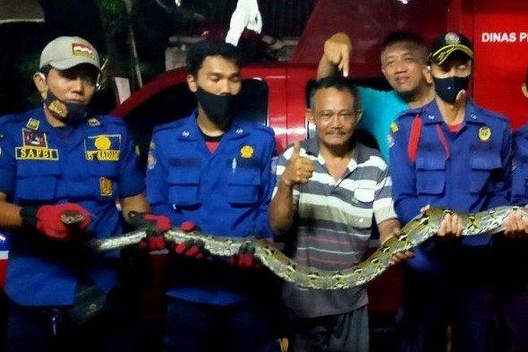 Ular sanca sepanjang 4 meter yang dievakuasi pihak Dinas Pemadam Kebakaran dan Penyelematan Kota Tangsel dari rumah warga di kawasan Jalan Aria Putra, Ciputat.