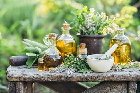 Catat, 7 Kesalahan Menanam Tanaman Herbal di Dalam Rumah