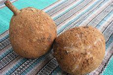 Apakah Durian Si Gundul Dijual di Pasaran?
