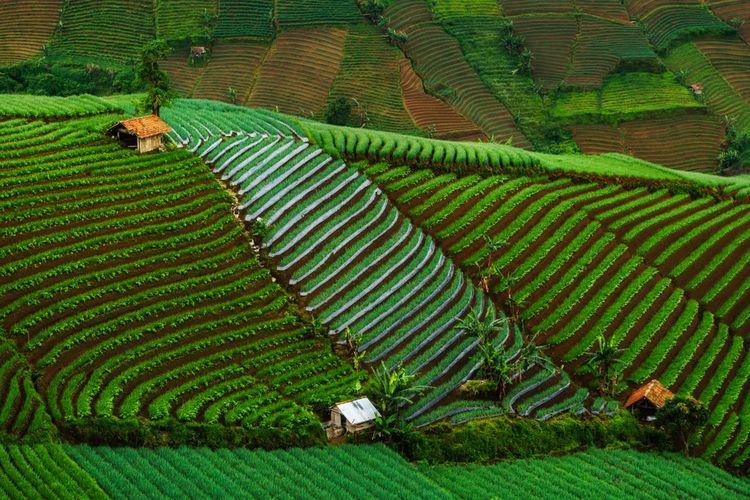 Lembah Panyaweuyan, Sawah Terasering Instagramable di Majalengka