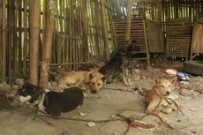 3 Efek Samping Mengonsumsi Daging Anjing
