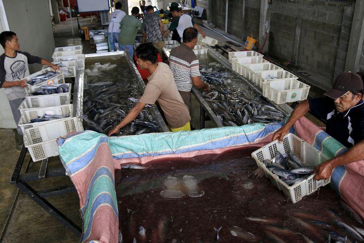 aktifitas pekerja di parik pengolahan ikan tuna UD Nagata Tuna, milik Muslim warga Desa Punge Blangcut, Kecamatan Jaya Baru, Kota Banda Aceh. Rabu (20/02/2019).