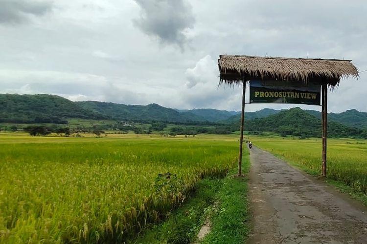 Pronosutan View ketika hampir musim panen, padi terlihat mulai menguning