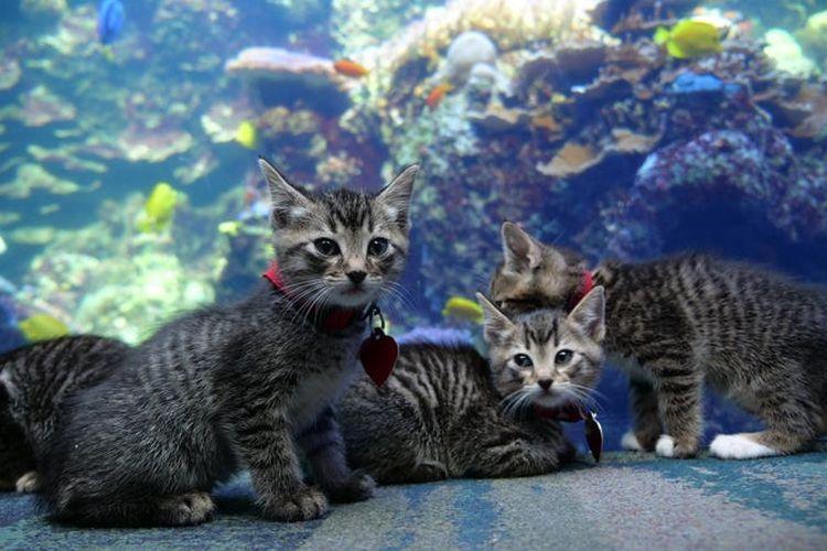 Anak-anak kucing bertemu ikan di Georgia Aquarium