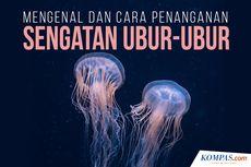 INFOGRAFIK: Mengenal Ubur-ubur dan Cara Menangani Sengatannya