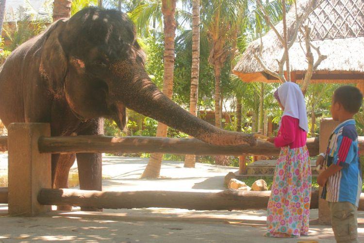 Dua orang bocah tengah bermain dengan salah satu dari tiga ekor gajah yang tersisa setelah Rambo mati.