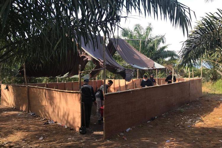 Lokasi perjudian sabung ayam di perkebunan kelapa sawit Bergosong Malaysia, di lokasi ini 17 WNI asal Sebatik diamankan IPD Tawau Malaysia