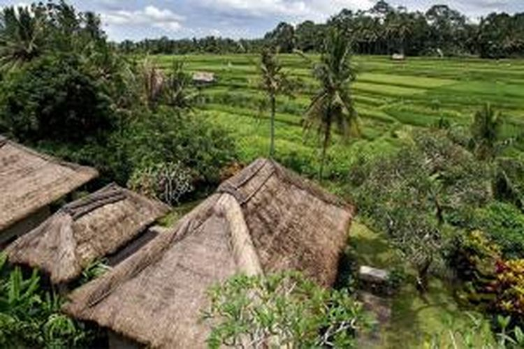 Maya Ubud Resorts and Spa juga dikelilingi persawahan.