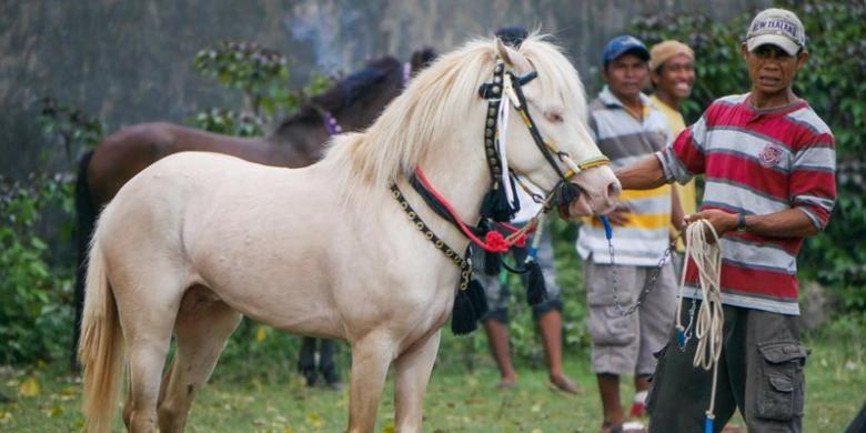 Kuda sumbawa sangat terkenal karena menjadi tunggangan para raja, bangsawan, dan panglima perang sejak abad 18.