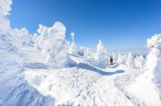 Jenis Salju dan Manfaatnya