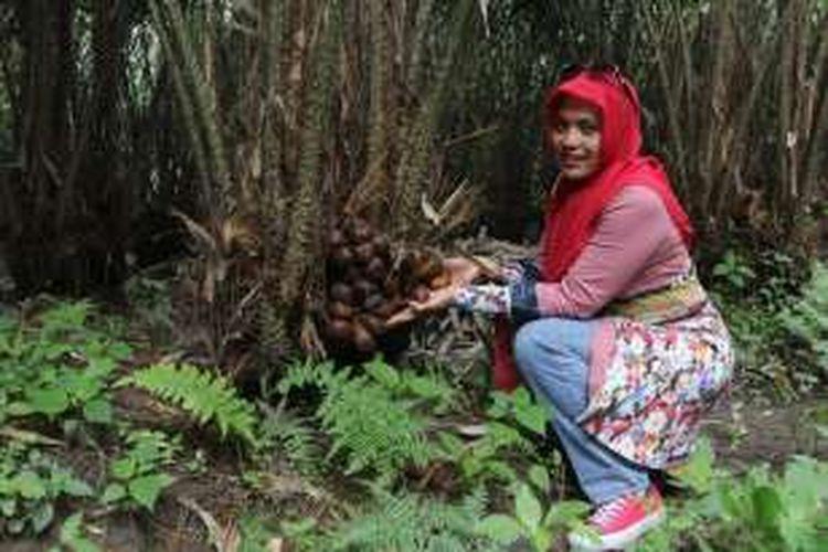 Wisatawan memetik buah salak di Randu Ijo, Jurang Jero, Kecamatan Srumbung, Kabupaten Magelang, Jawa Tengah, awal Januari 2017.