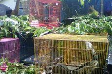 Polisi Ungkap Perdagangan Satwa Langka di Magelang