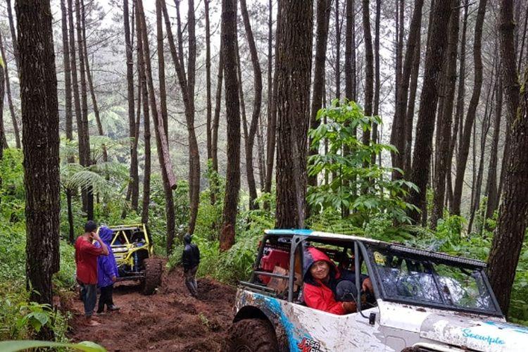Perkebunan Pinus kaki Gunung Cikuray yang jadi jalur off road