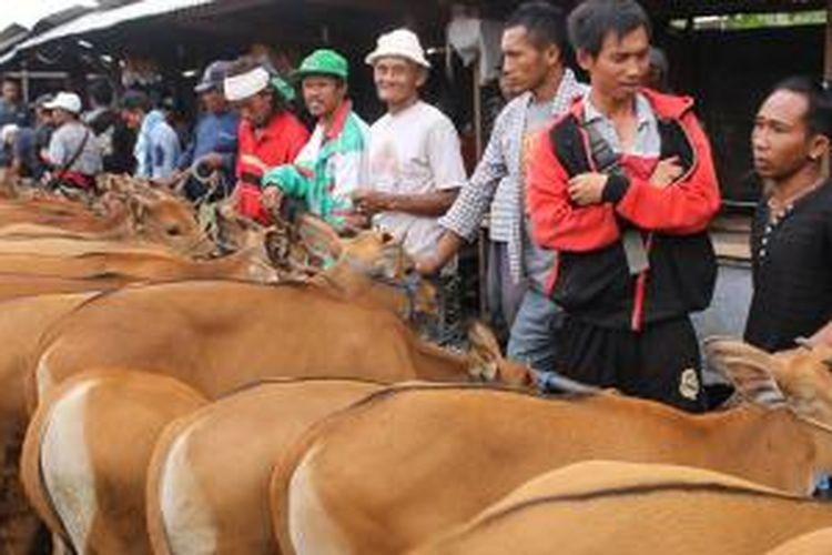 Sapi-sapi di Pasar Beringkit, Kecamatan Mengwi, Kabupaten Badung, Bali, dikelompokkan penjualannya sesuai umur dan kebutuhan.