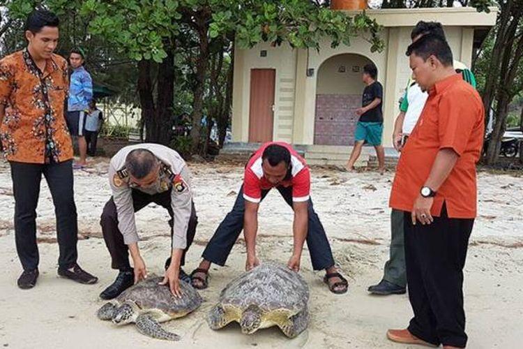 Dua ekor penyu hijau dilepasliarkan di pantai Bolihutuo oleh Balai Konservasi Sumber Daya Alam (KSDA) Gorontalo dan Polres Boalemo.