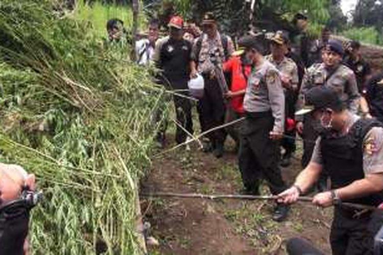 Kepolisian Daerah Aceh membakar tanaman ganja di kawasan Pegunungan Lamteuba, Aceh Besar, Sabtu (27/2/2016). Polisi menemukan 54 hektar ladang ganja di kawasan itu. Operasi pemusnahan dipimpin Kapolda Aceh Irjen Pol Husein Hamidy didampingi Kadiv Humas Mabes Polri Irjen Pol Anton Charlian.