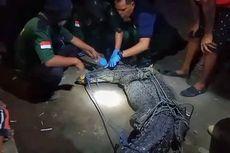 Cerita Buaya Muara Terjerat Jaring Nelayan, Sudah Mati Lemas dan Ada Luka di Kepala