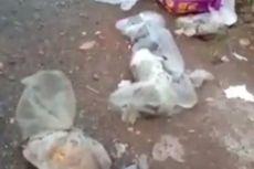 Pengakuan Pembuang Bangkai Kucing di Banjarmasin yang Ditangkap Polisi