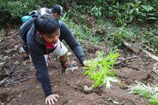 Enam Jam Mendaki Bukit, Polisi Temukan Ladang Ganja di Kebun Kopi
