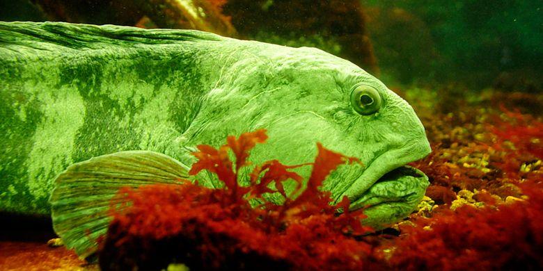 5 Jenis Ikan Yang Namanya Berpadu Dengan Hewan Lain Halaman All Kompas Com