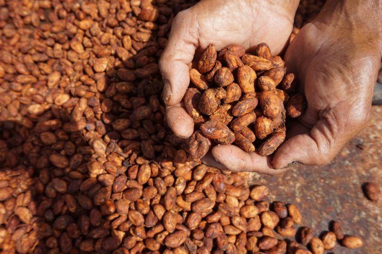 Biji kakao jenis Edel yang diekspor dan dihargai 100 rupiah per biji