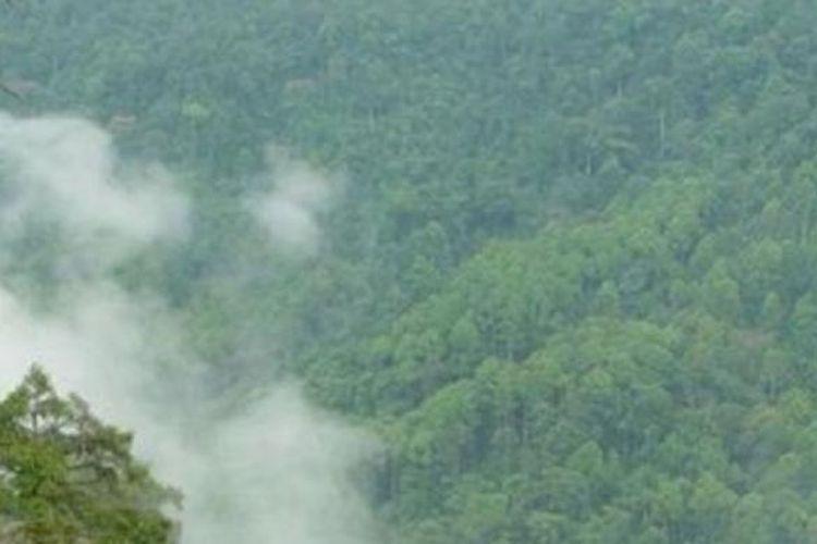 Ilustrasi Hutan Kalimantan