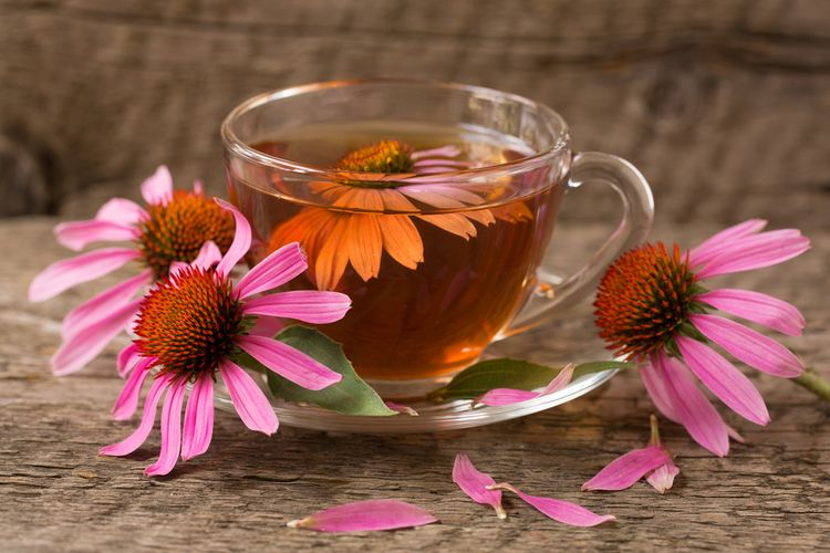 Teh dari bunga echinacea