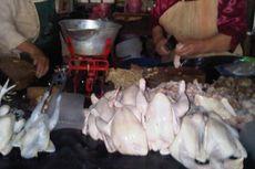 Harga Ayam Potong Anjlok, Peternak di Sumsel Terancam Gulung Tikar