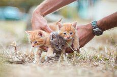 Bolehkah Memandikan Anak Kucing Umur 3 Hari? Ini Kata Dokter Hewan
