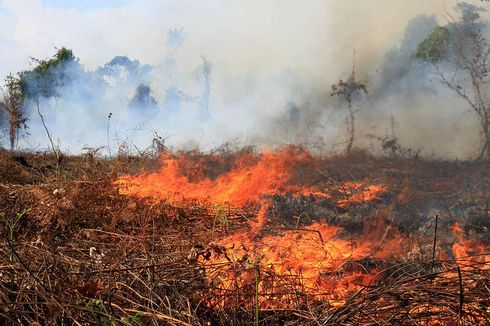 Cegah Kebakaran Lahan Gambut, BRG Lanjutkan Bangun Sekat Kanal