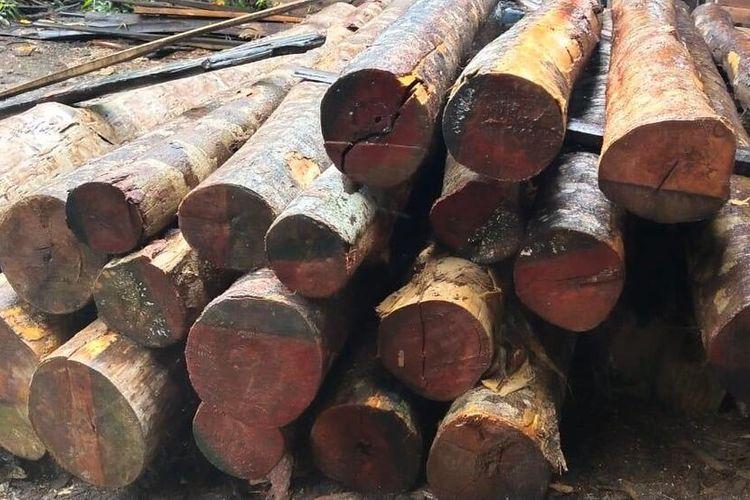Sebanyak 800 batang dan 50 kayu olahan jenis rimba di Desa Korek, Kecamatan Sungai Ambawang, Kabupaten Kubu Raya, Kalimantan Barat, disita aparat kepolisian, Kamis (16/1/2020).