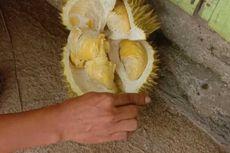Nikmati Menyantap Durian Sambil Berwisata di Lembah Kolang