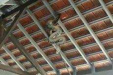 Ular Piton 4,5 Meter Melilit di Atap Parkiran Kampus Poltek Bali