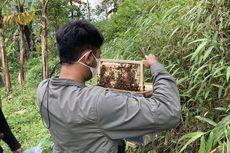 Ada Wisata Ternak Lebah Madu di Lembah Gunung Pangrango, Seperti Apa?