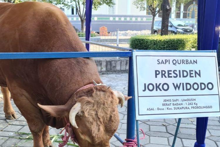 Sapi kurban jenis Limousin milik Presiden Jokowi sampai di halaman Masjid Nasional Al-Akbar Surabaya Minggu (18/7/2021) sore.