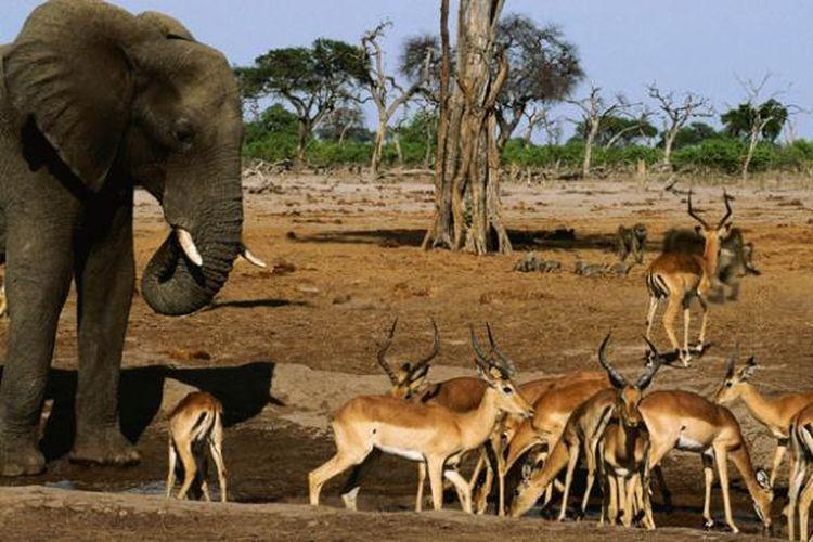 Banyak wisatawan mancanegara datang ke Botswana tiap tahun untuk menyaksikan kehidupan margasatwanya.