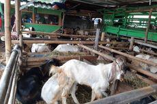 Ini Protokol Kesehatan Shalat Idul Adha dan Penyembelihan Hewan Kurban di Bekasi