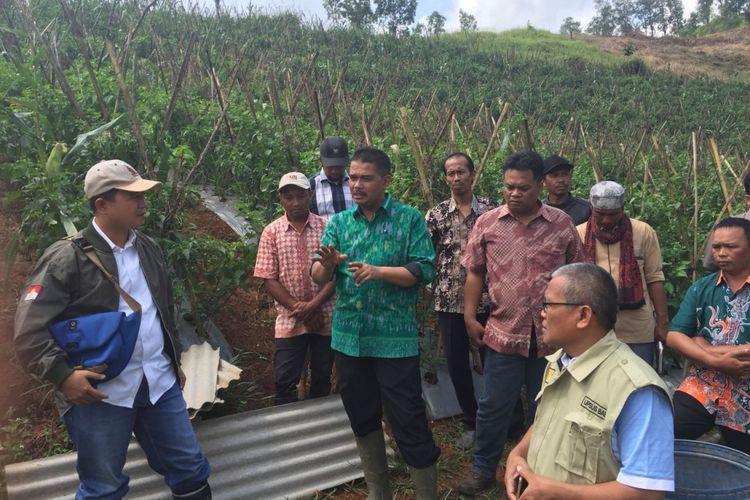 Direktur Jenderal Hortikultura Kementerian Pertanian, Suwandi, menegaskan kebijakan wajib tanam bagi importir tetap berlanjut.