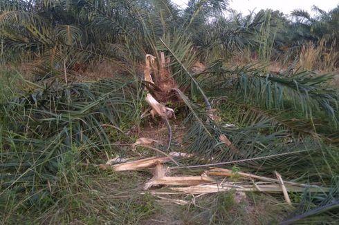BBKSDA Riau: Banjir Sebabkan Gajah Bergerombol Keluar dari Habitatnya