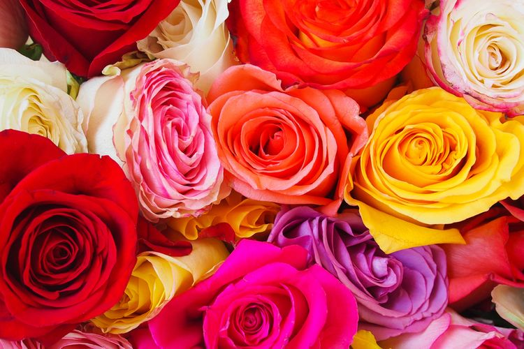 Ilustrasi mawar