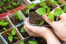 7 Alasan Mengapa Berkebun Baik untuk Kesehatan