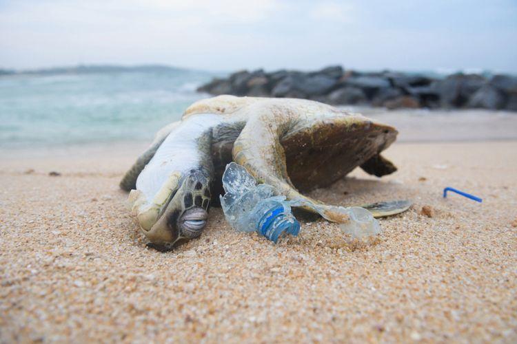 Ilustrasi sampah plastik dan seekor penyu yang mati