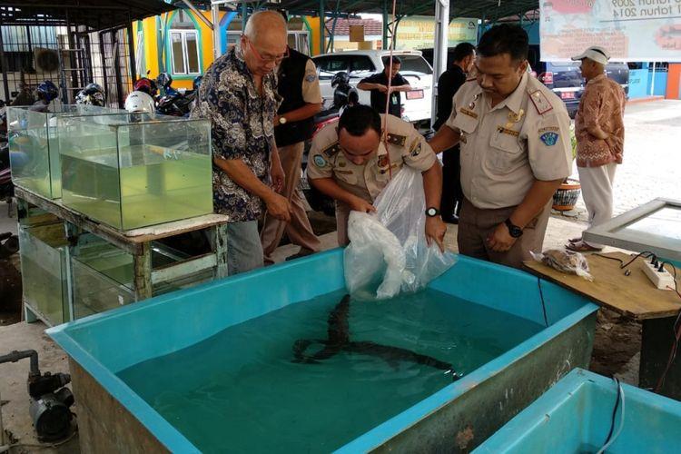 Tim gabungan dari Balai Karantina Ikan menemukan adanya penjualan ikan jenis Aligator yang dijual secara bebas di pasar Burung Palembang, Sumatera Selatan, Jumat (6/7/2018).