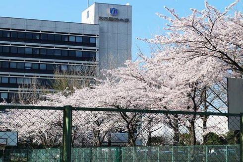 Raih Beasiswa ke Jepang Dapat Bonus Kuliah di AS, Mau?