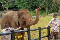 Tidak Sembarangan, Begini Cara Pemindahan 2 Gajah dari Bali ke Lembang