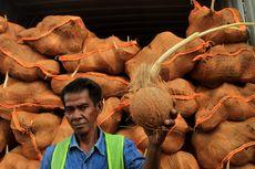 Penolakan 25 Kontainer Kelapa oleh Thailand karena Bertunas, Perusahaan Rugi Rp 2,5 Miliar