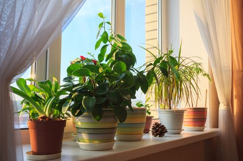 4 Tips Agar Tanaman Tetap Tumbuh Meski Ditinggal Jauh