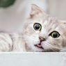 5 Cara Membuat Kucing Peliharaan Sehat dan Bahagia