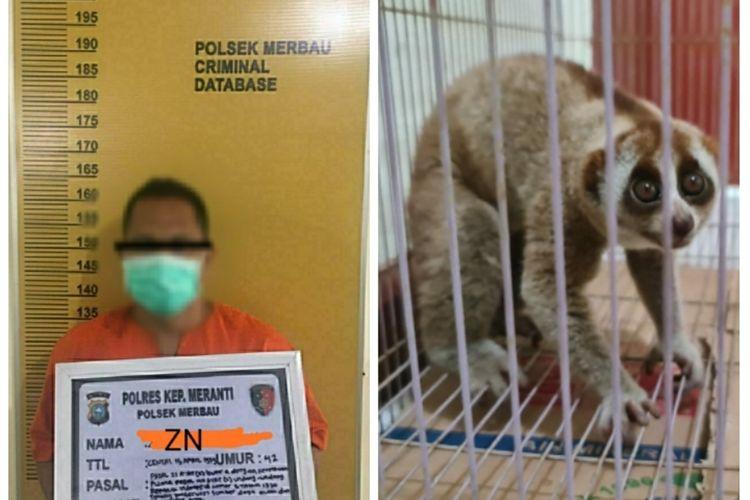 Petugas kepolisian Polsek Merbau menangkap seorang pelaku penangkap satwa dilindungi jenis Kukang di Kabupaten Meranti, Riau.