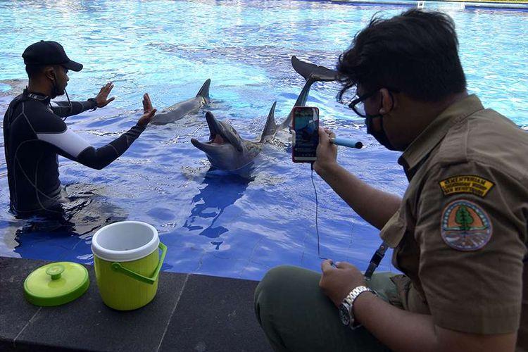 Petugas Balai Konservasi Sumber Daya Alam (BKSDA) Bali mengamati Lumba-Lumba di Bali Exotic Marine Park, Denpasar, Bali, Selasa (28/4/2020). BKSDA Bali melakukan pemantauan di sejumlah lembaga konservasi untuk memberikan edukasi serta memastikan satwa yang ada di lembaga konservasi tetap dalam kondisi yang baik dan tetap mendapatkan perlakuan sama dengan kaidah-kaidah kesejahteraan satwa selama masa pandemi COVID-19.